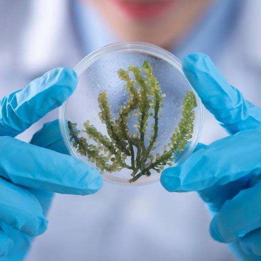 plant based medicine laboratory testing